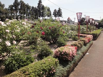 箭弓‗牡丹園 (1).JPG
