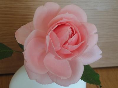 Rose_Oct (1).JPG