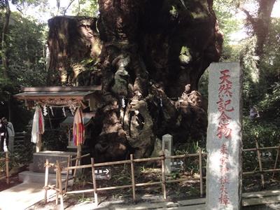 来宮神社_熱海 (5).JPG